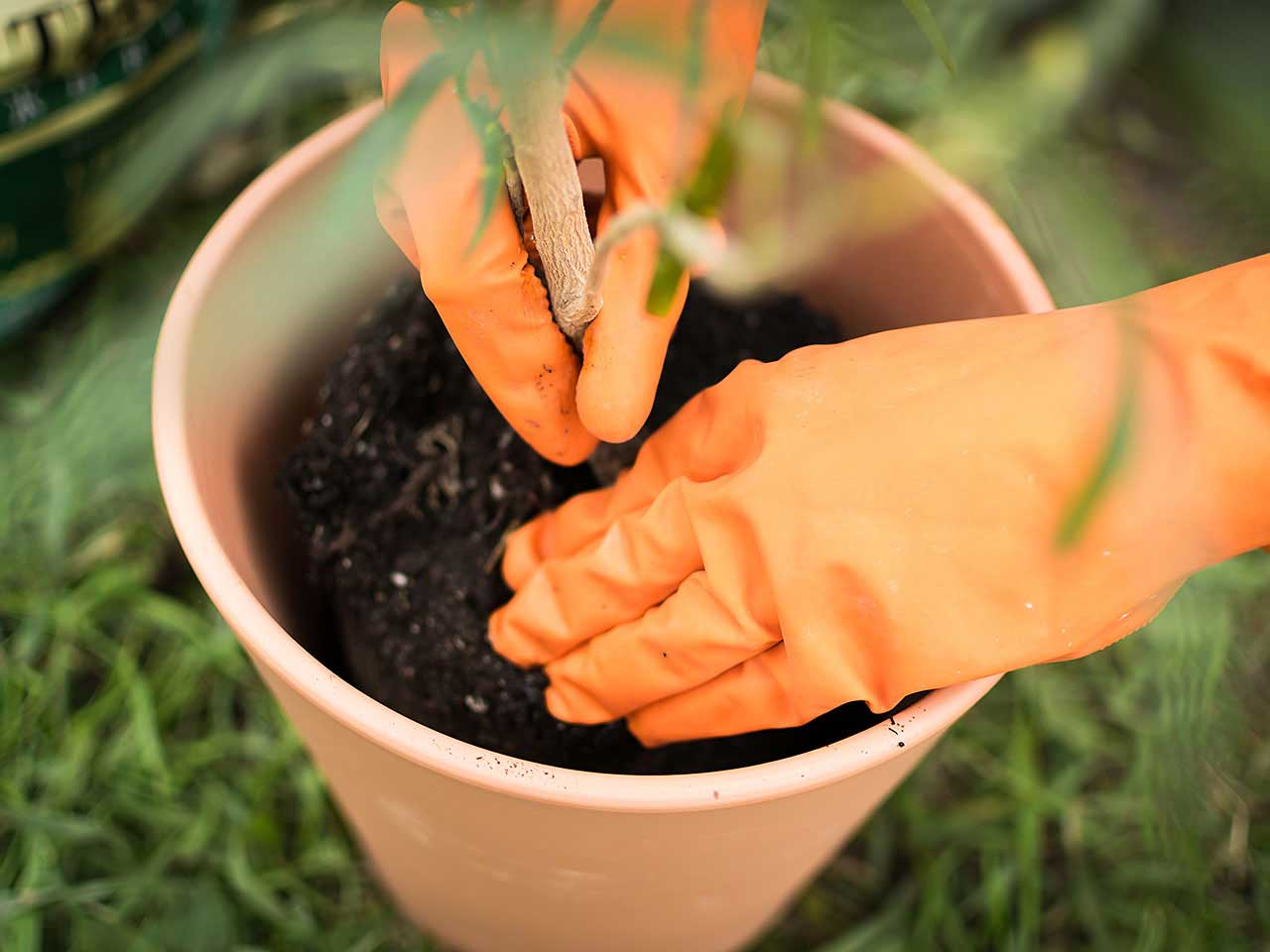 old-potting-compost-uses-crop