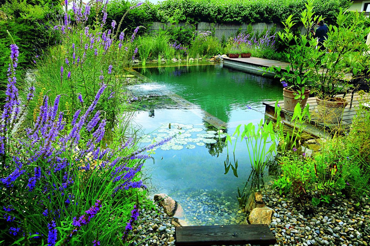 Beautiful Natural Ponds