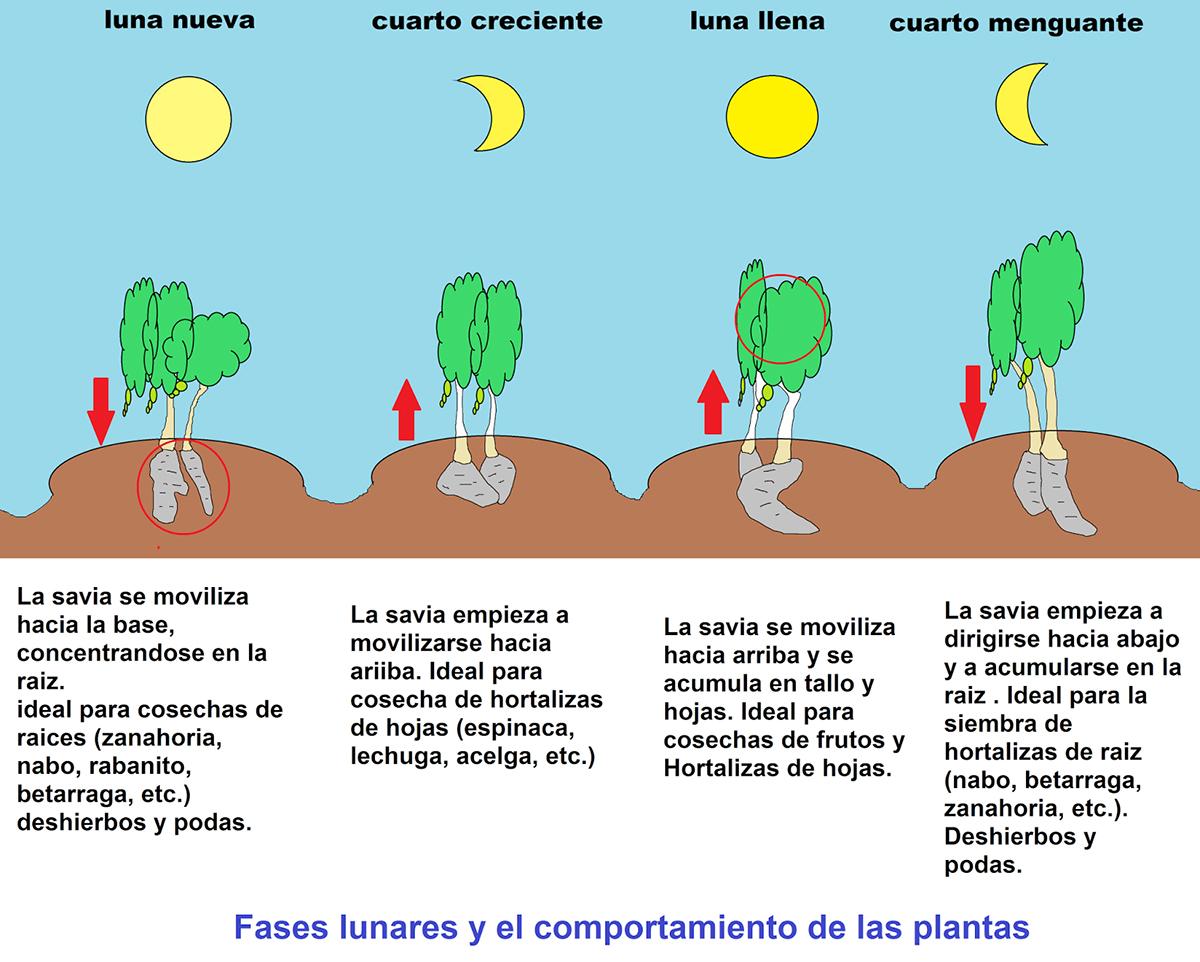 EL LIBRO DE LA LUNA. INFLUENCIA DINAMICA SOBRE LAS PLANTAS | Construir ...
