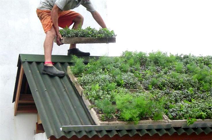 techos verdes 3