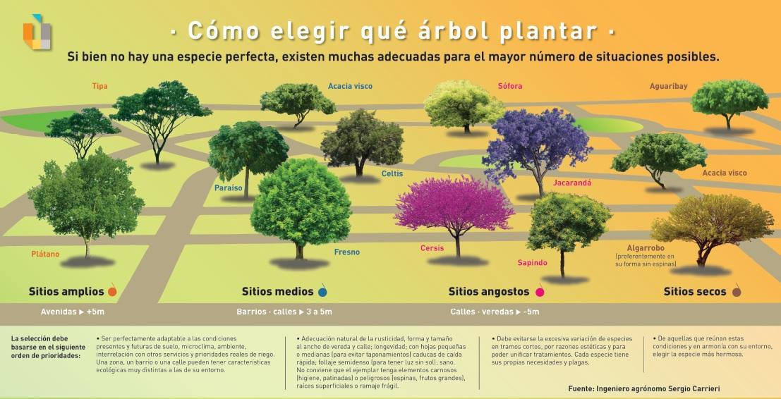 Infografía elaborada por el Ing. Agrónomo Sergio Carrieri / Universidad